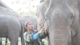 Mahout & Elephant in the morning